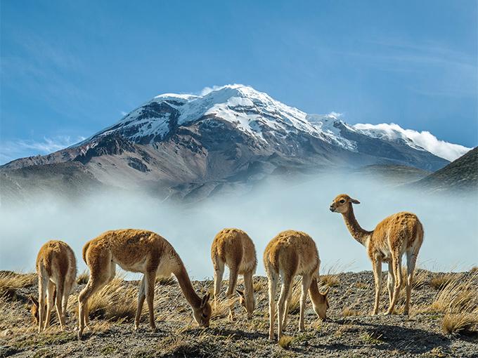 Image Amerique Latine Equateur volcan Chimborazo