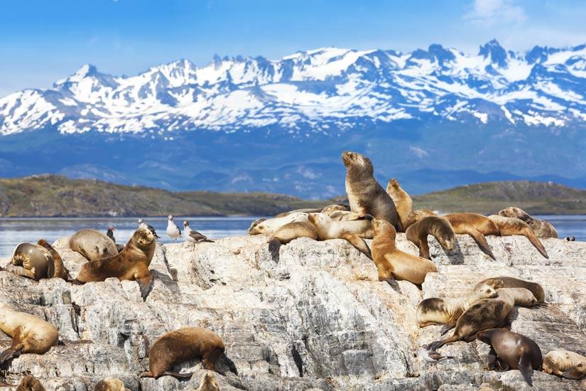 Image Argentine Ushuaia Beagle  it