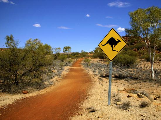 Image australie kangourou