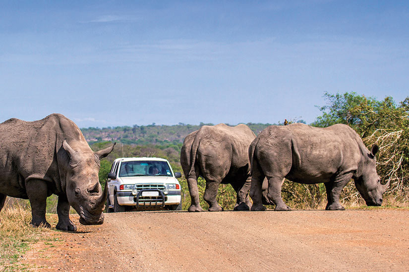 image Afrique du Sud parc Kruger  fo