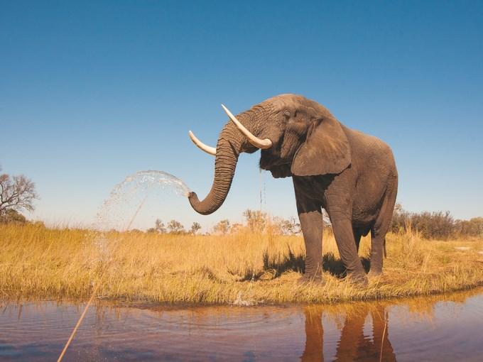 image Afrique elephant