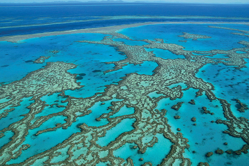 image Australie Grande Barriere de Corail  fo