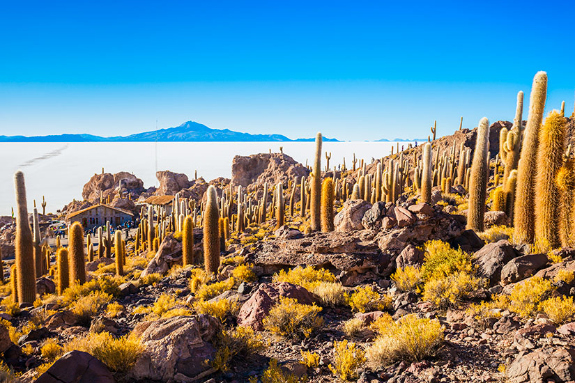 image Bolivie Uyuni ile Cactus  fo