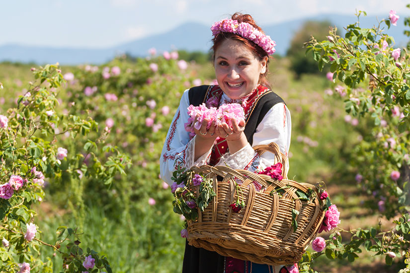 image Bulgarie Fille Le Rose festival de cueillette  it