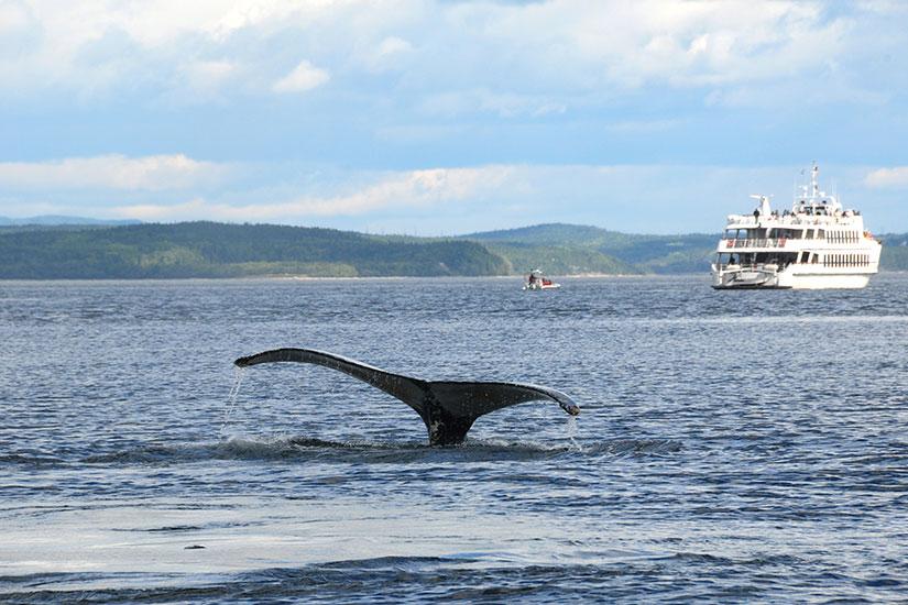 image Canada Quebec Tadoussac Baleine  it