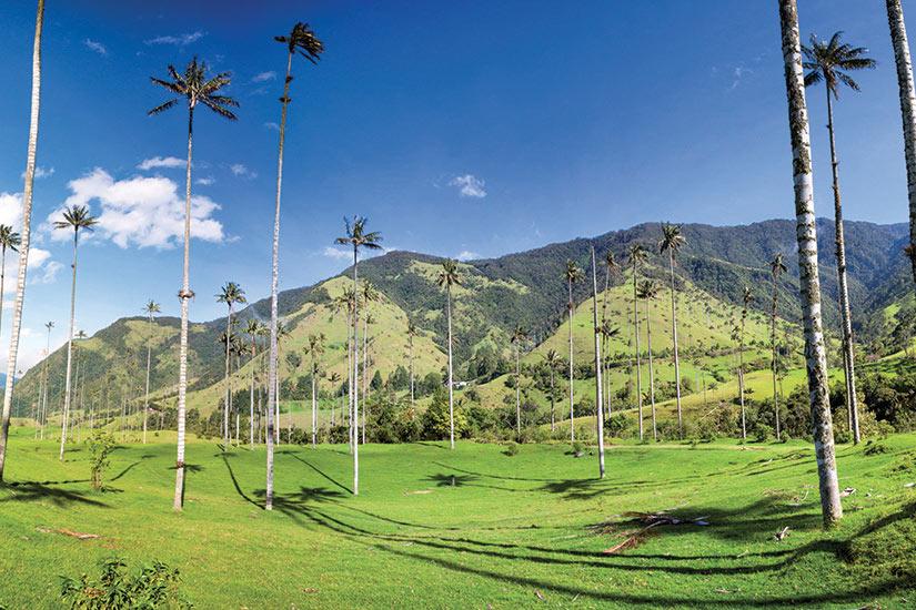 image Colombie Salento valle de Cocora avec palmiers de cire  fo