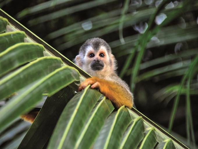 image Costa rica parc national manuel antonio singe
