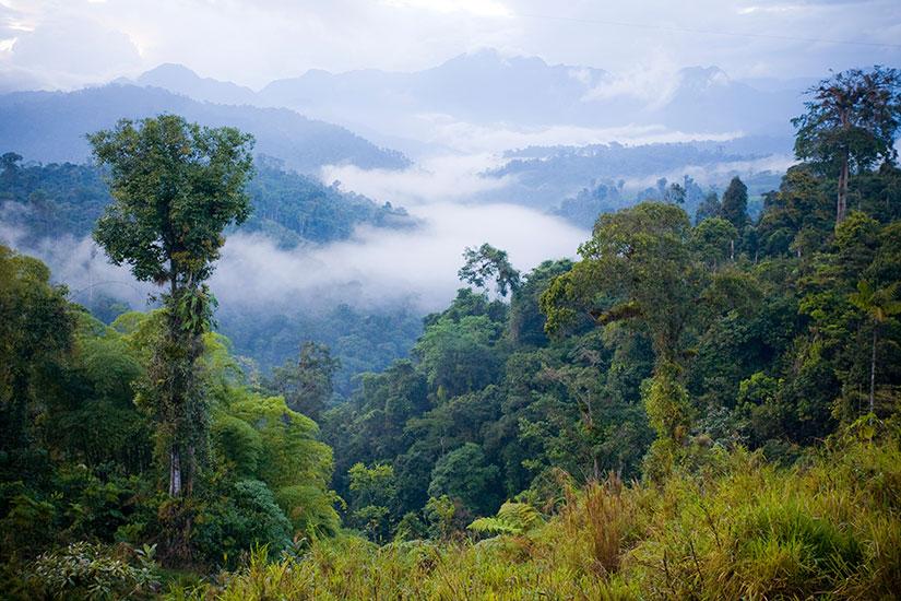 image Equateur Foret tropicale  it