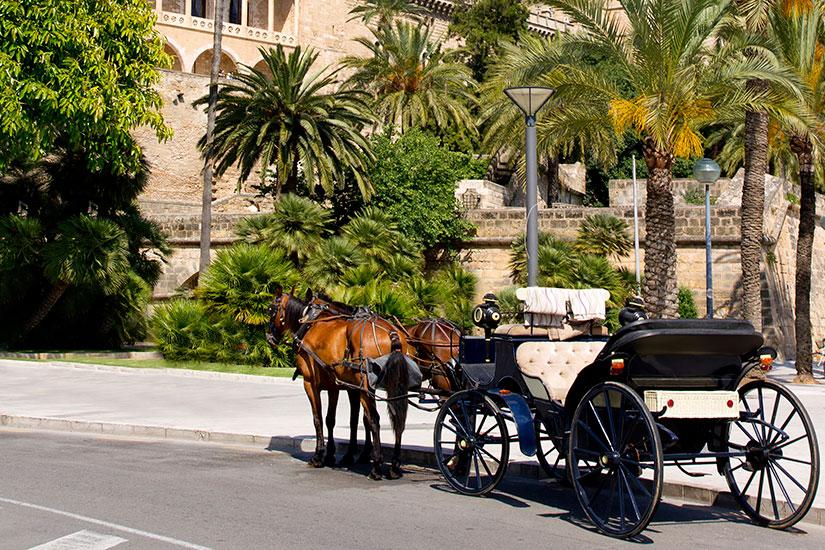 image Espagne Palma Majorque Cathedrale caleche chevaux  it