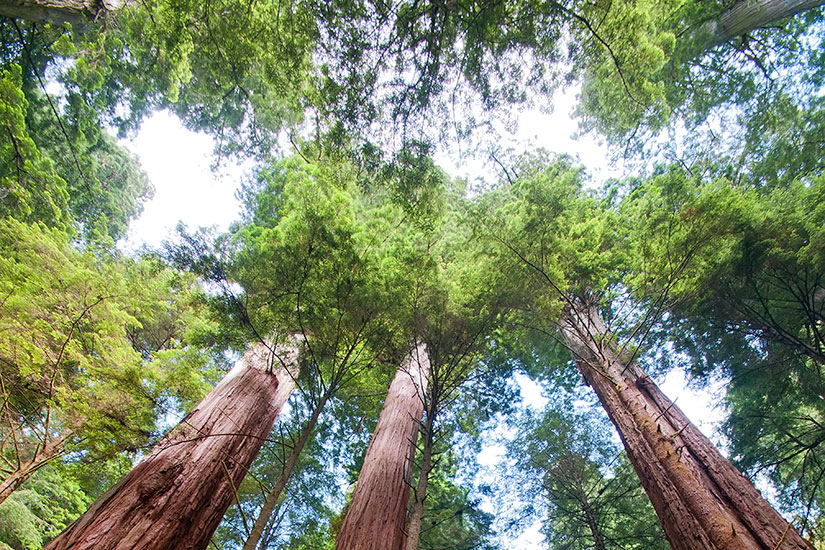 image Etats Unis Californie Foret sequoias  it