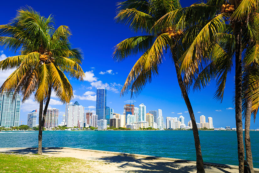 image Etats Unis Miami Palmiers panorama  it