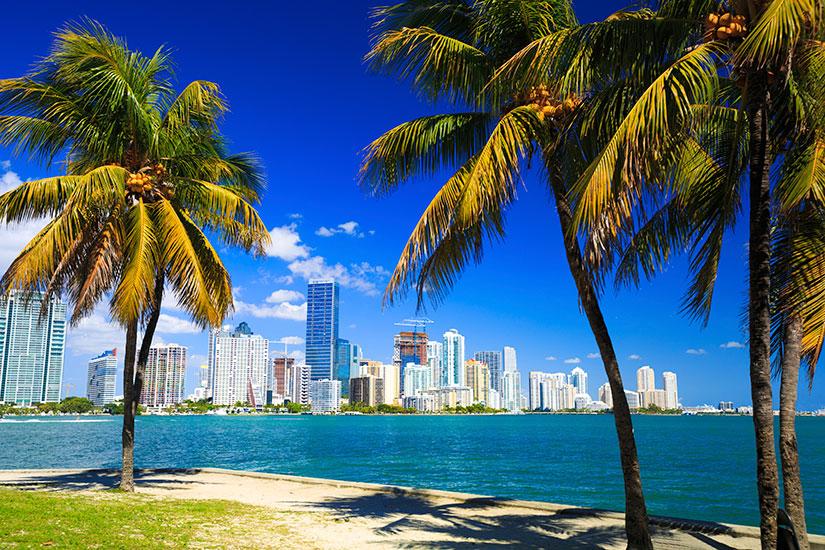 image Etats Unis Miami Palmiers panorama  it