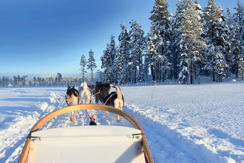 image Finlande chien traineau