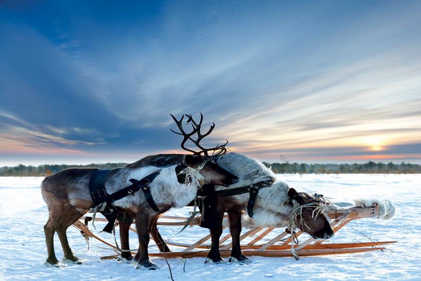 image Finlande laponie renne animal arctique nature neige 46 fo_44941358