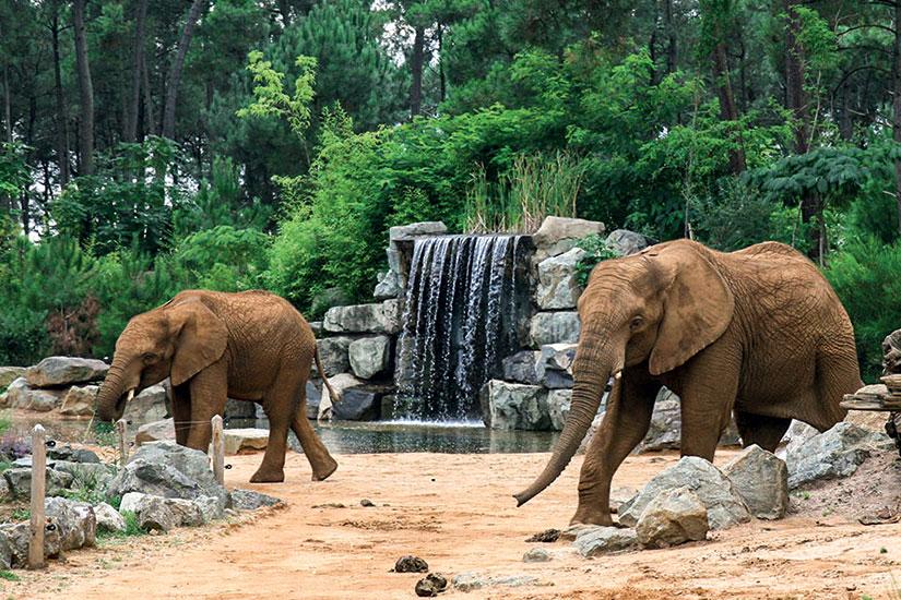 Jours chaigneau voyages for Chambre zoo de la fleche