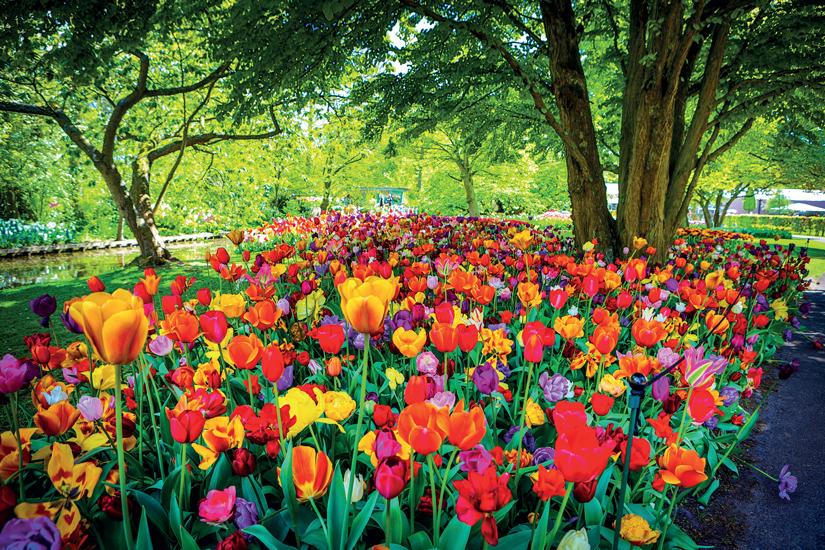 image Hollande pays bas keukenhof parc tulips jardin fleuri 20 fo_162262368