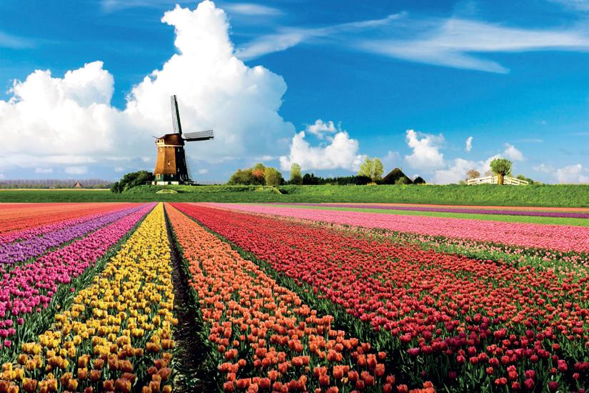 image Hollande scene printemps tulipe champ 41 it_4120074