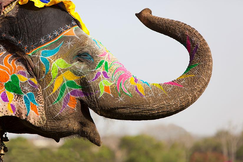 image Inde Decorees elephant  it