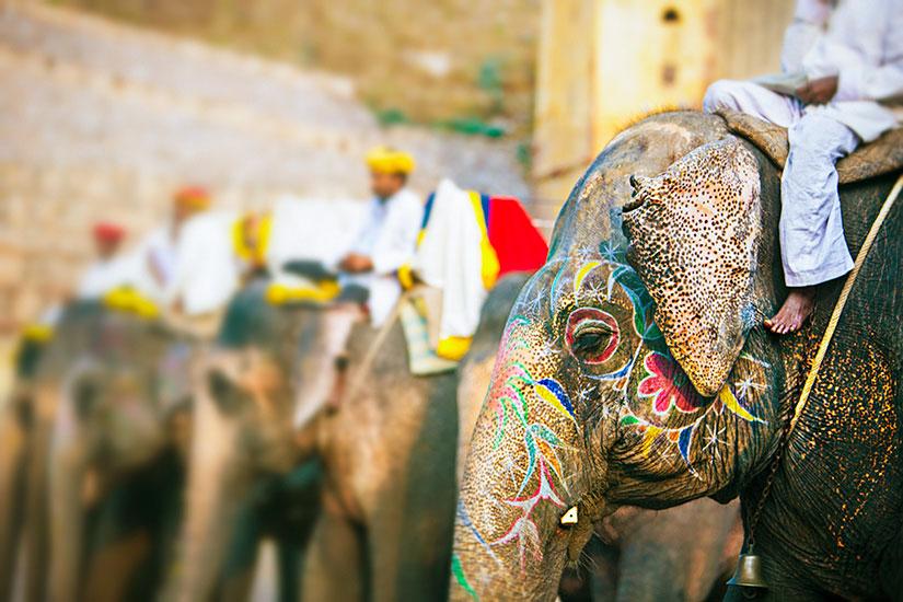 image Inde Jaipur elephant  it