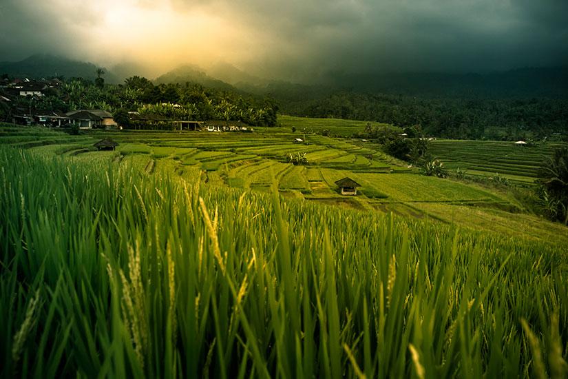 image Indonesie Bali Riz terrasse  it