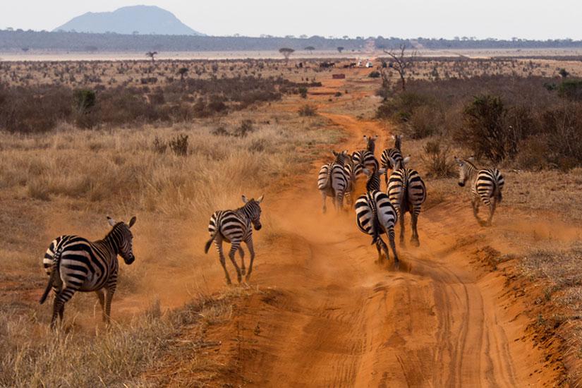 image Kenya zebres  fo