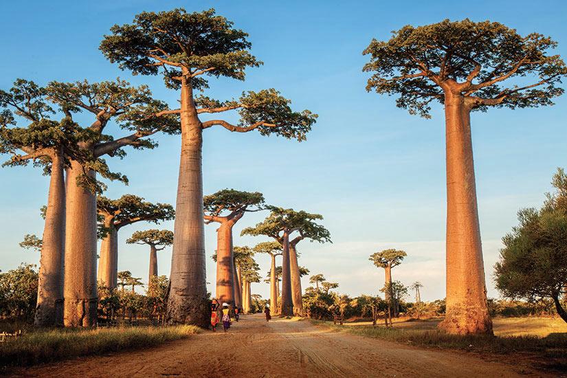 image Madagascar Italy Baoab le long de la route rurale au jour ensoille  fo