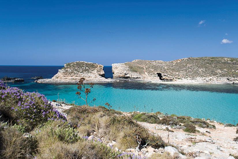 image Malte Gozo  it