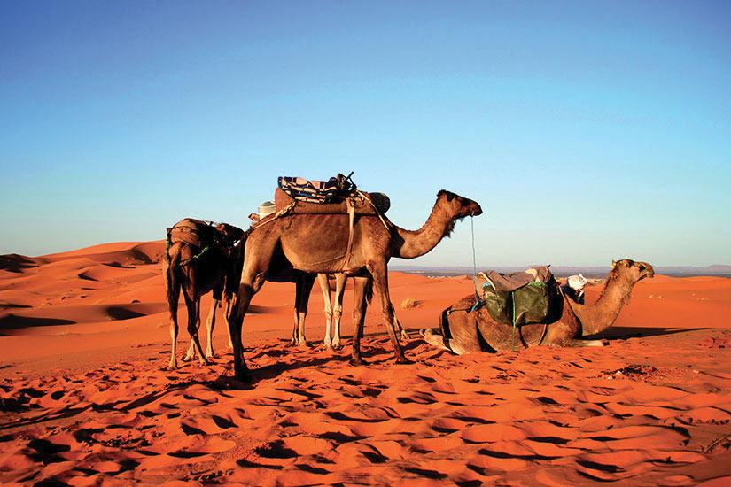 Photo n° 3 Splendeurs Marocaines