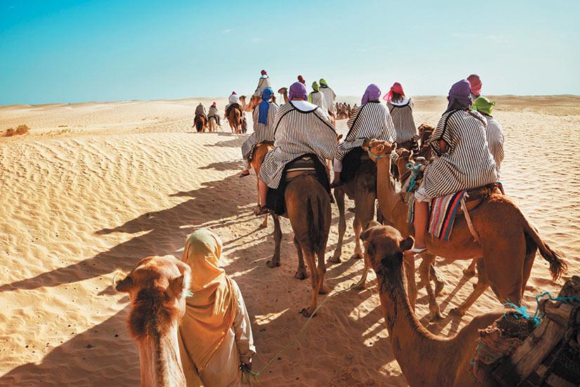 image Maroc Marrakech desert camile  fo