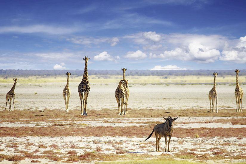 Circuit Périple au cœur des terres africaines, Namibie, Botswana, Zimbabwe - 1
