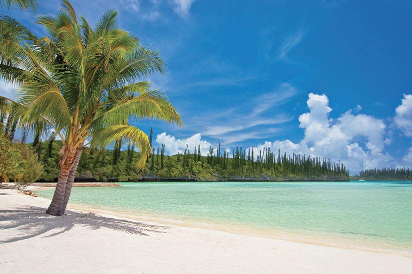 image Nouvelle Caledonie Ile aux pins Palmier sur une plage tropicale  it