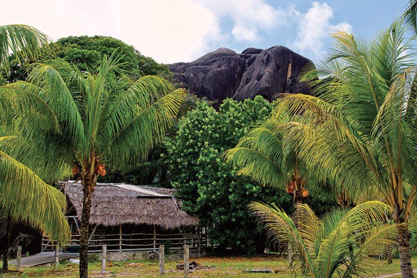 image Seychelles La Digue velles palmieres avec des montagnes de granit  fo