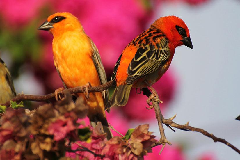 image Seychelles oiseau  it