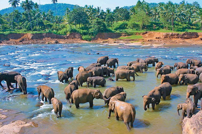 image Sri Lanka Kandy Elephants jeu  it