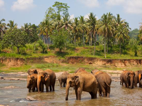image Sri lanka pinnawela