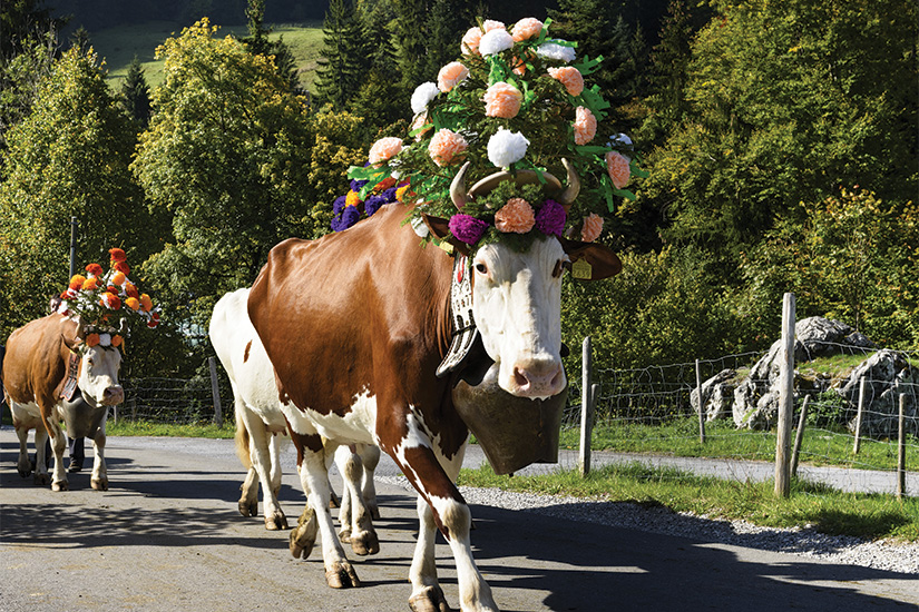 image Suisse Charmey transhumance 14 as_94704704