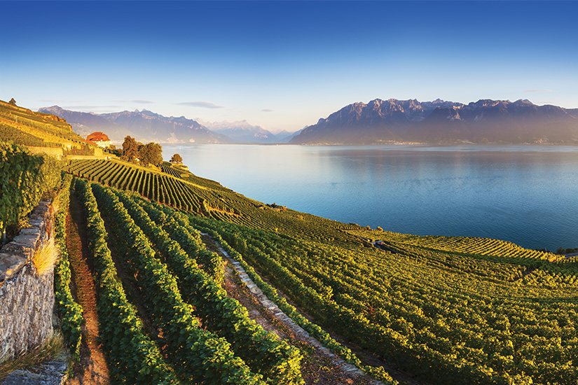 image Suisse vignoble au bord du lac Leman as_389590371