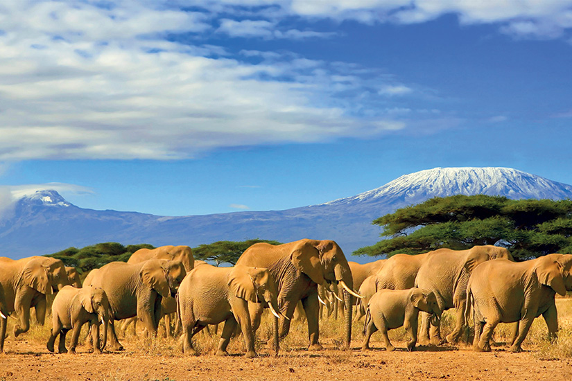 image Tanzanie Kilimandjaro et elephants 65 it 820399474