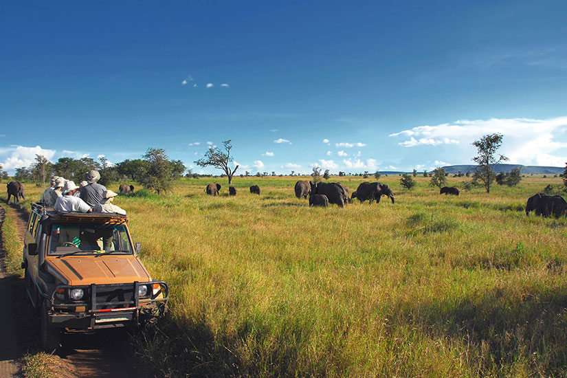image Tanzanie Serengeti Safari  it