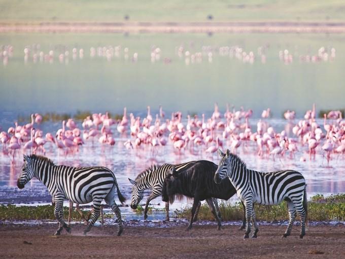 image Tanzanie lac manyara zebre