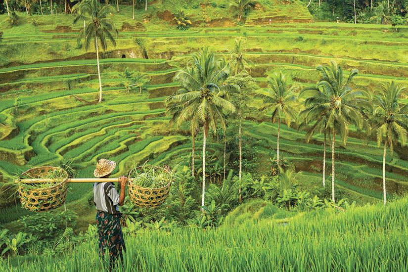 image Vietnam Bali Sapa riziere en terrase  fo