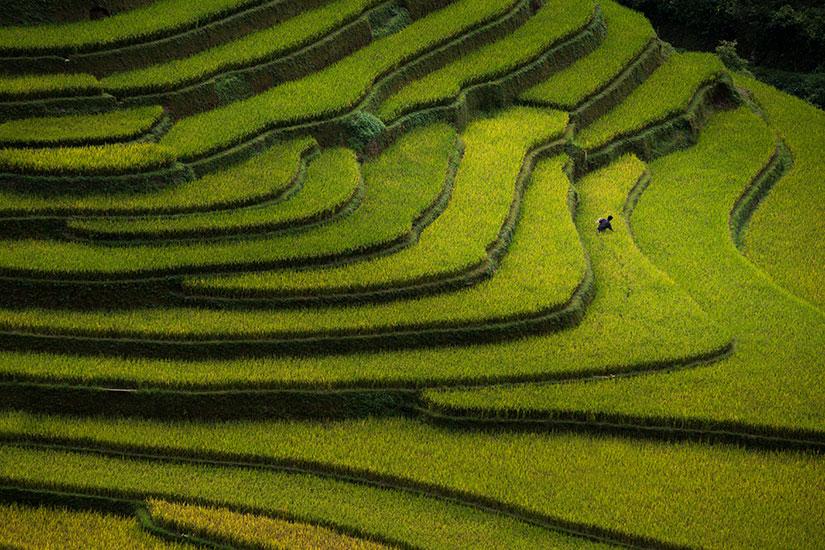 image Vietnam Champs riz terrasse  it