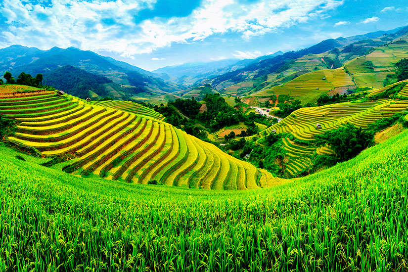 image Vietnam Mu Cang Chai champs riz terrasses  it