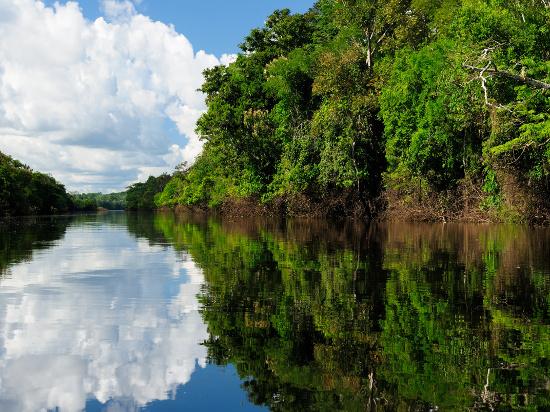 image amazonie