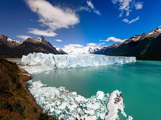 image argentine calafate
