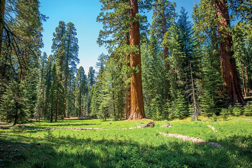 image etats unis sequoia national park 01 as_134173778