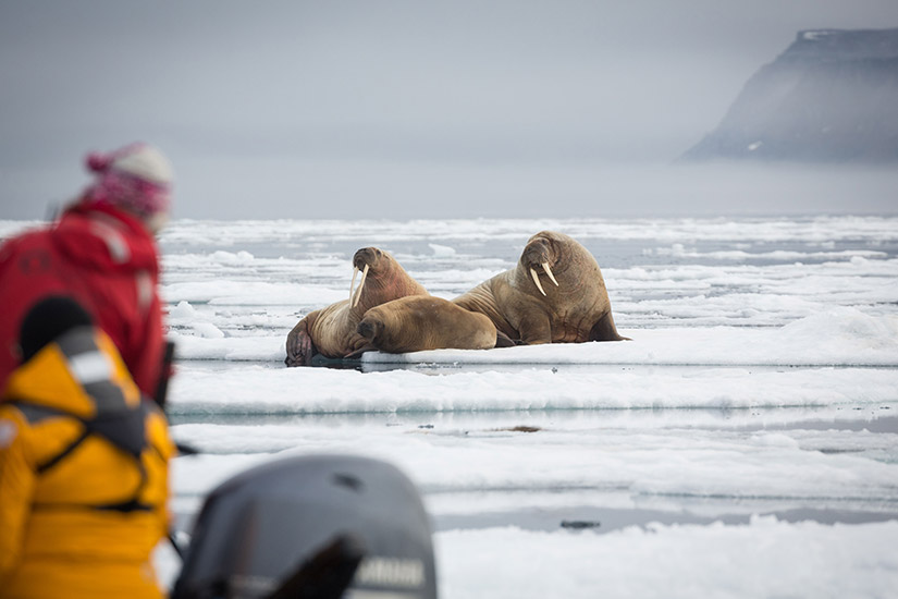 image russie croisiere joyaux de l arctique russe 3