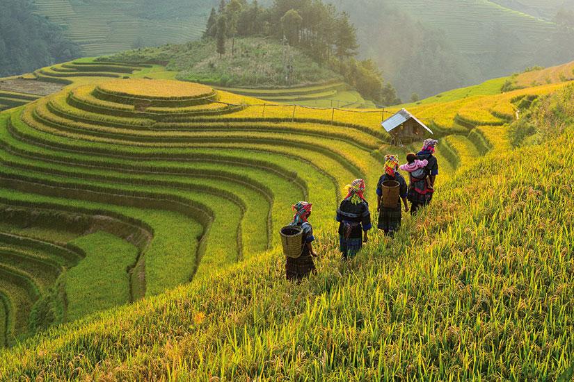 image vietnam mu cang chai champs riz terrasse  fo