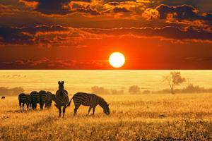 afrique du sud parc kruger