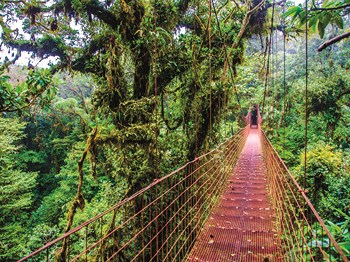 costa rica pont suspendu au parc national arenal